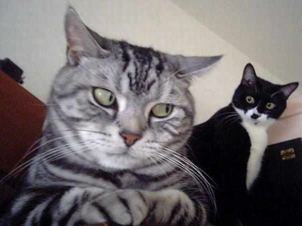 cat01099